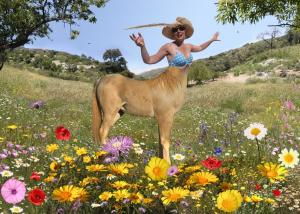 photo montage illustration - centaur